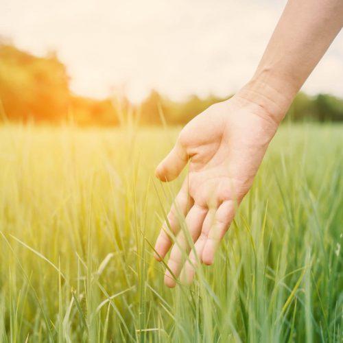 hand-touching-fresh-grass-sunset